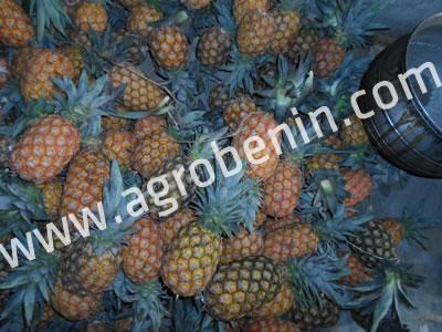 Ananas Bénin
