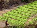 Une aide de 49,2 millions d'USD pour renforcer la sécurité alimentaire au Bénin