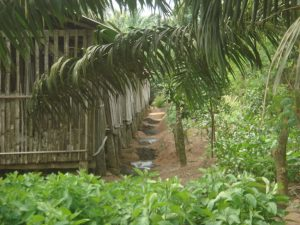 Entrepreunariat agricole au Bénin