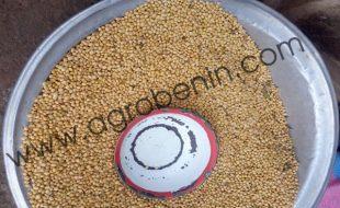 Céréale soja