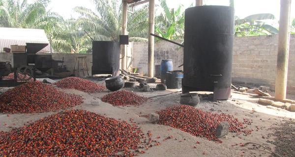 Huile de palme avec des noix sélectionnées