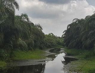 Rivière Noire d'Avrankou au Bénin