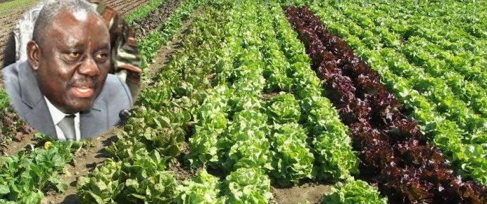 Gaston Cossi Dossouhoui à propos de la campagne agricole 2019 - 2020