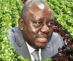 Le ministre de l'Agriculture de l'Élevage et de la Pêche, Gaston Cossi Dossouhoui