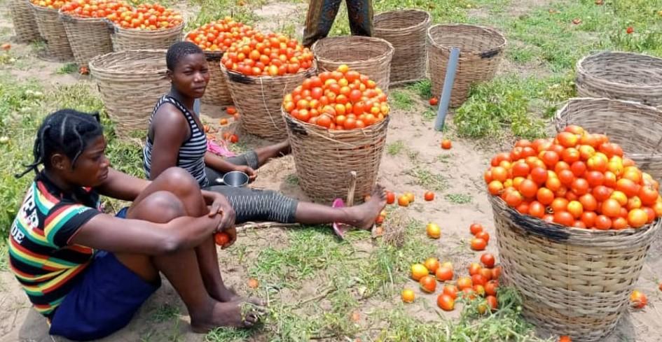 Acheteurs de tomates auprès des maraîchers de Grand-Popo