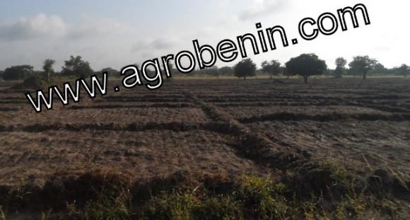 riziculture-glazoue-benin