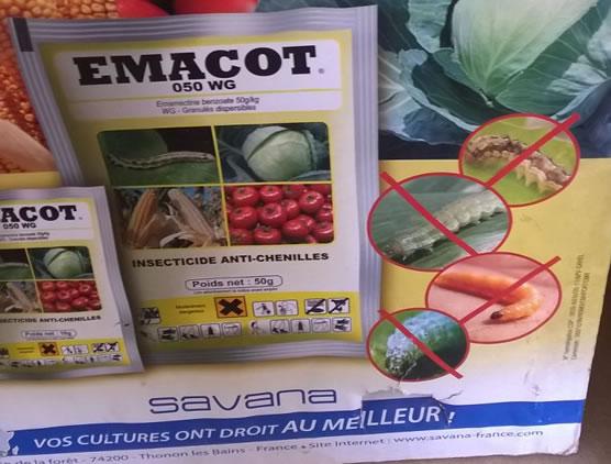 EMACOT 050 WG contre les chenilles ravageuses du maïs