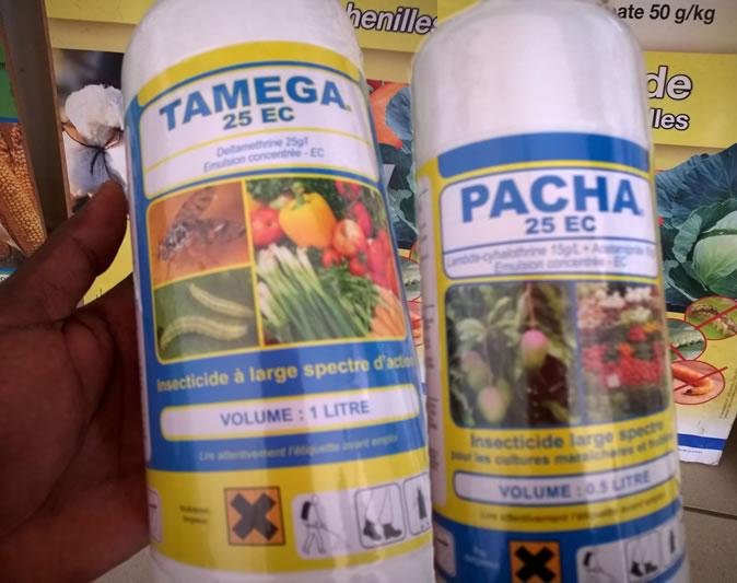 TEMEGA 25 EC et le PACHA 25 EC pour lutter contre les chenille ravageuses du maïs