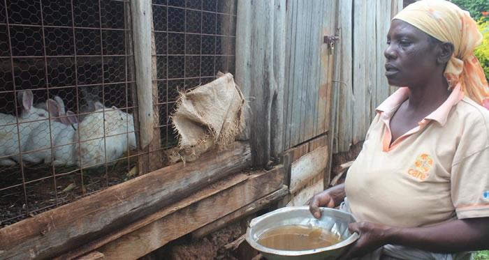 L'urine du lapin comme fertilisant et pesticide